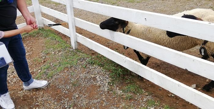 牧歌の里-餌やり体験