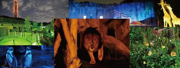 東山動物園ナイトズー2018年!開催期間は8月10日~19日
