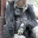 東山動植物園のナイトズーは混雑する!子連れで行くならお弁当を準備